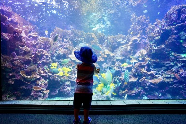 10. Maui Ocean Center 1